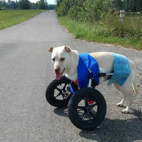 Dog wheelchairs printed by 3D printer